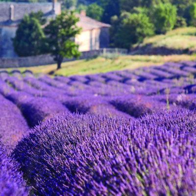 Elvecruise i Provance, Ama Waterways, Cruisereiser, Nordmanns-Reiser, elvecruise i Provence